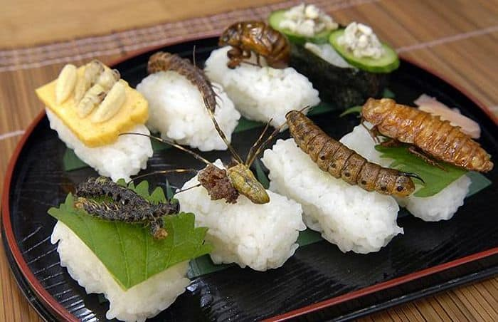 insect_food10