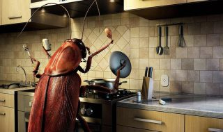 insetos-na-cozinha-tricurioso