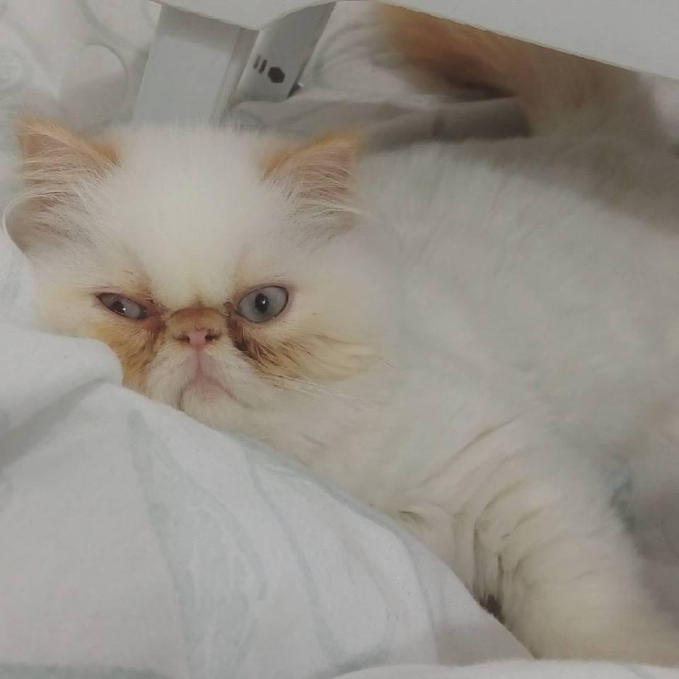 juju-gato-amigo