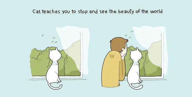 tenha-um-gato-em-casa-05