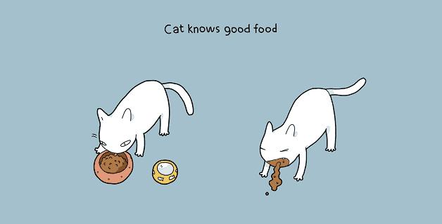 tenha-um-gato-em-casa-07