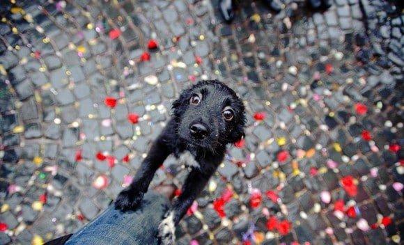 Fotos-de-cachorros-10-580x352