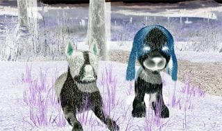 bow wow sad toy dogs cachorros youtube bizarro creepypasta tricurioso