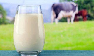 14-fatos-curiosos-sobre-o-leite