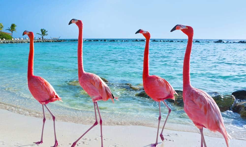 por-que-os-flamingos-sao-cor-de-rosa.jpg
