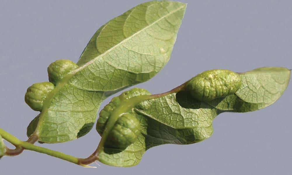 Tem Na Web - As plantas também podem ter câncer?