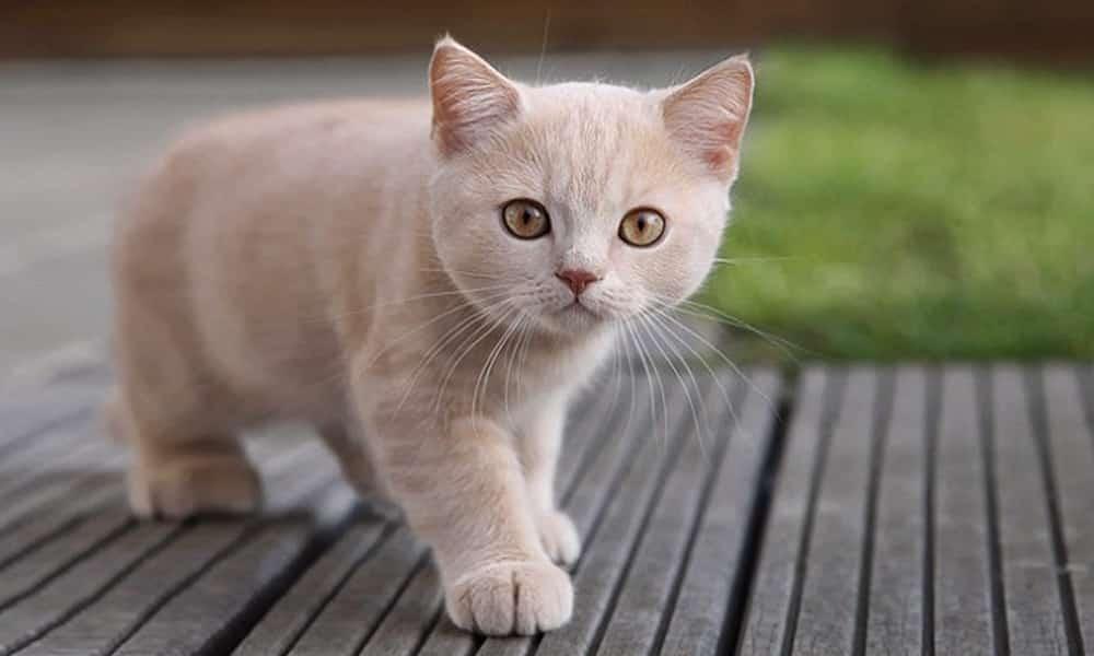 Voc sabia que deve avisar seu gato sempre que for sair de - Casas para gatos baratas ...