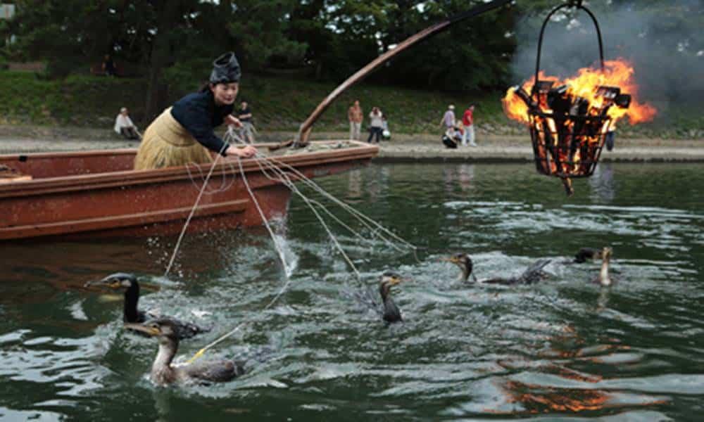 Tem Na Web - Conheça o ukai, a técnica japonesa de pesca com o uso de aves