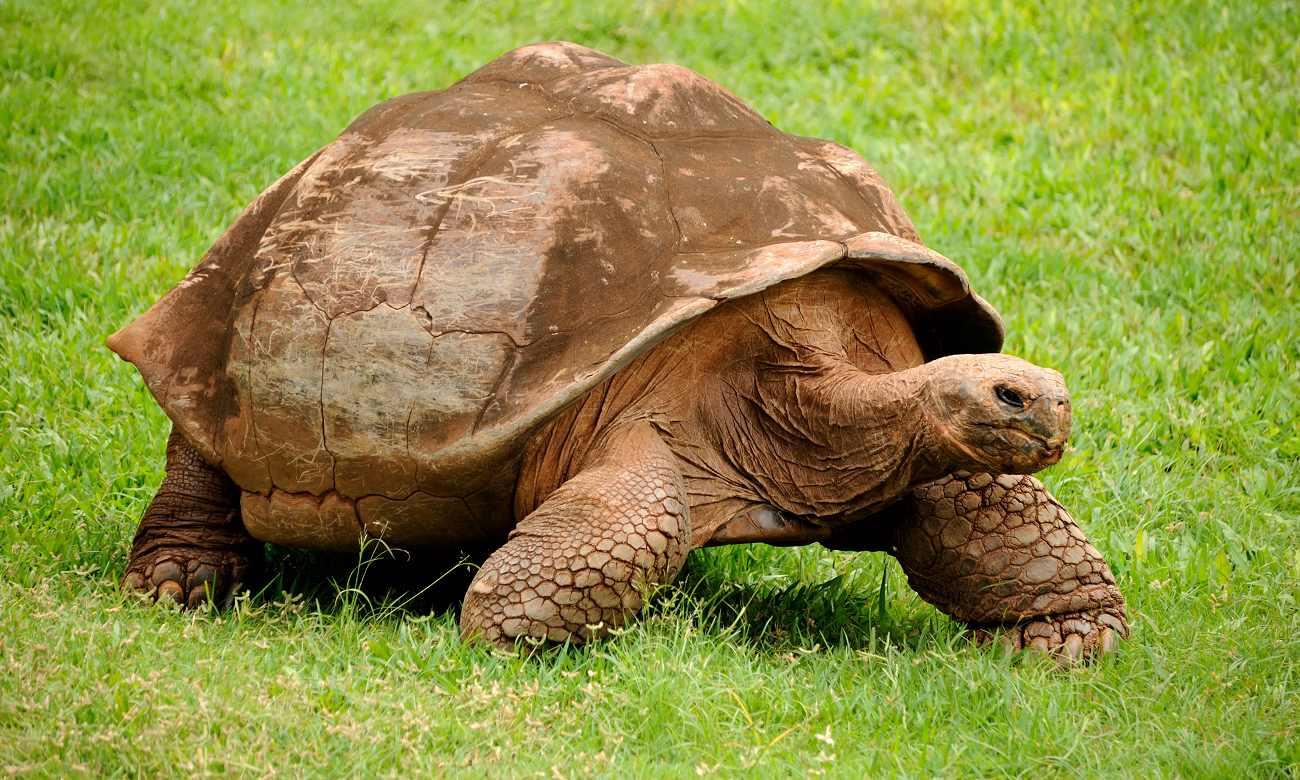 7 Animais que vivem mais que os humanos