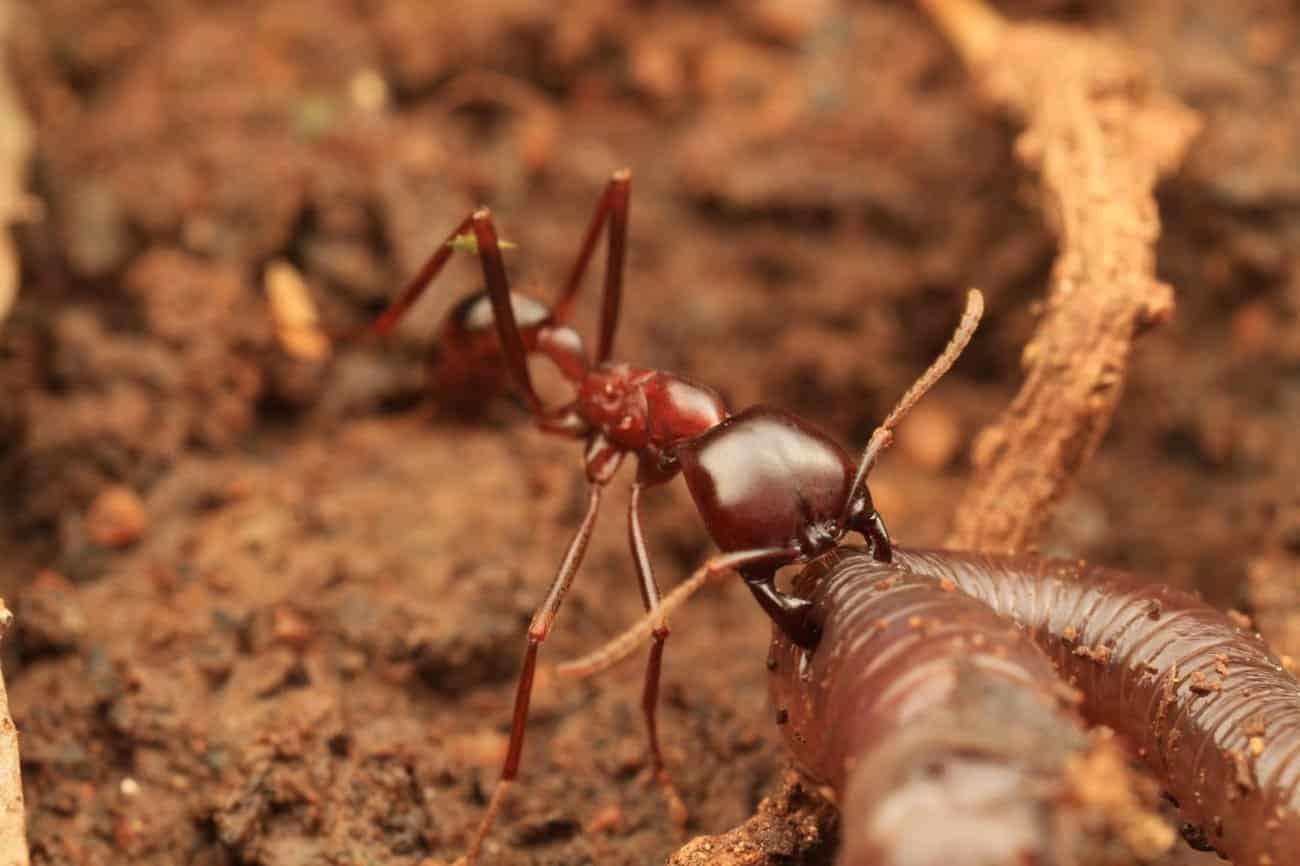 Conheça alguns dos insetos mais perigosos do mundo