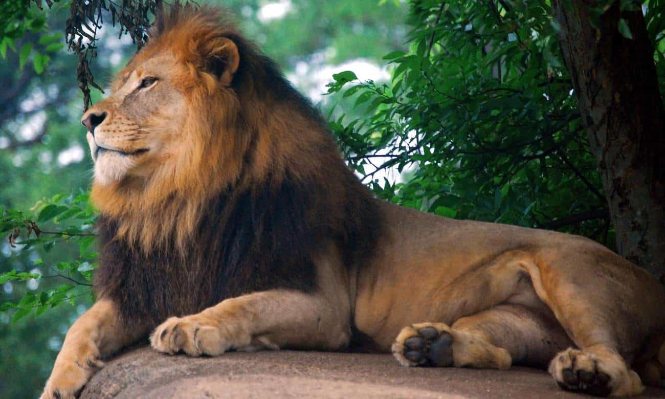 Conheça os zoológicos mais incríveis do mundo