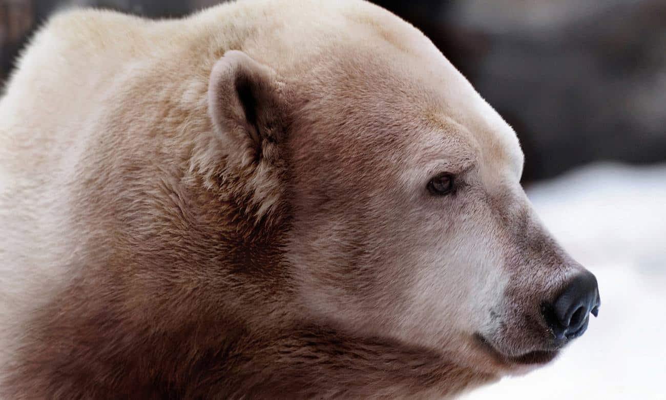 Conheça 5 animais híbridos incríveis