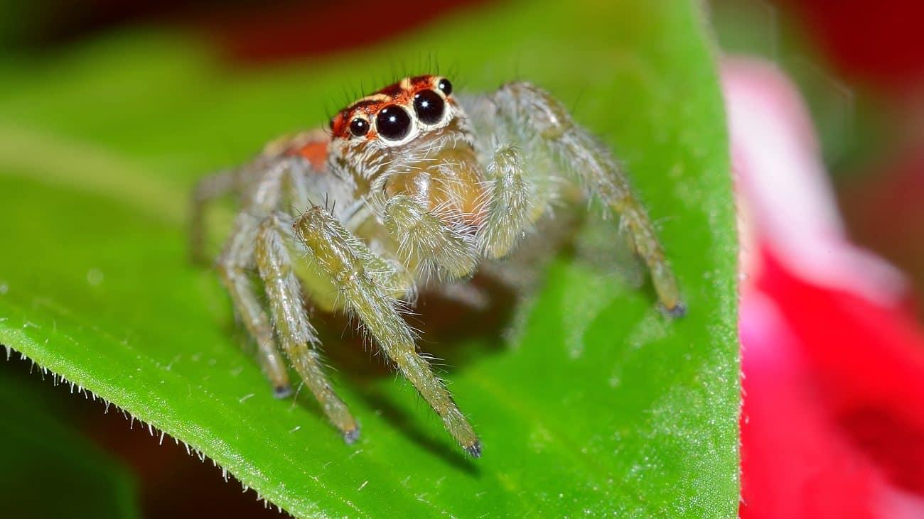 As aranhas são insetos?