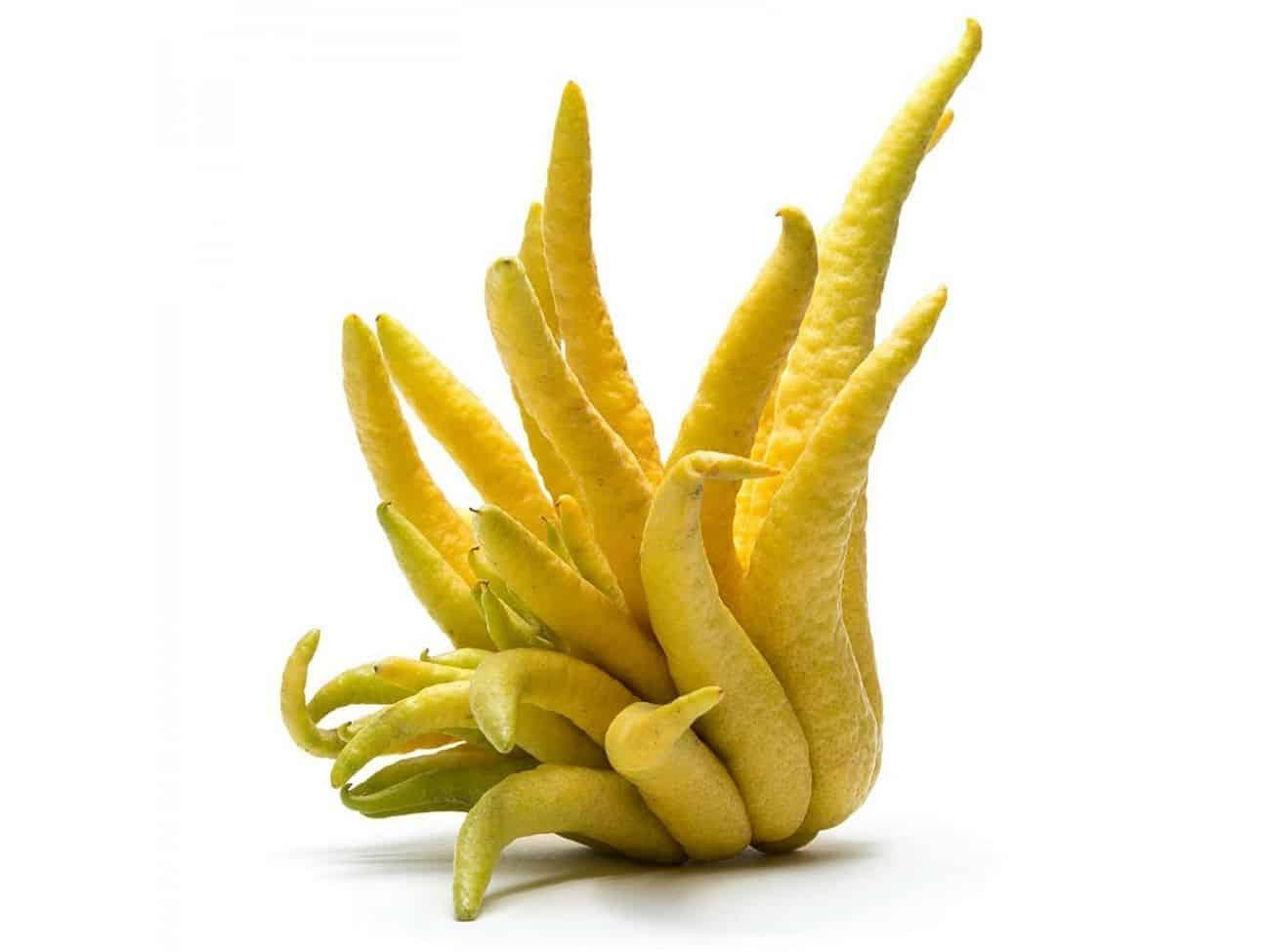 Conheça 5 das frutas mais bizarras do mundo