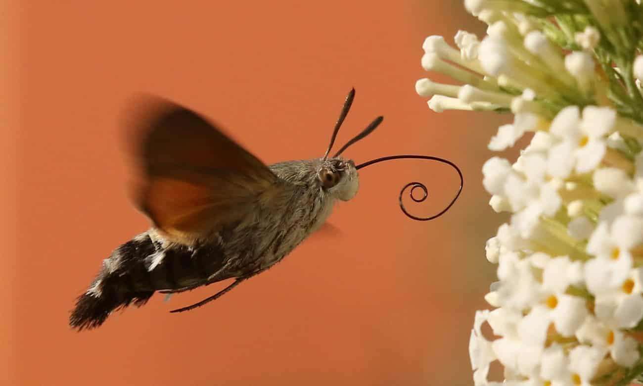 Conheça 5 dos insetos mais bizarros do mundo