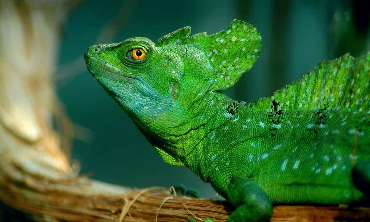 Conheça alguns animais com habilidades incríveis