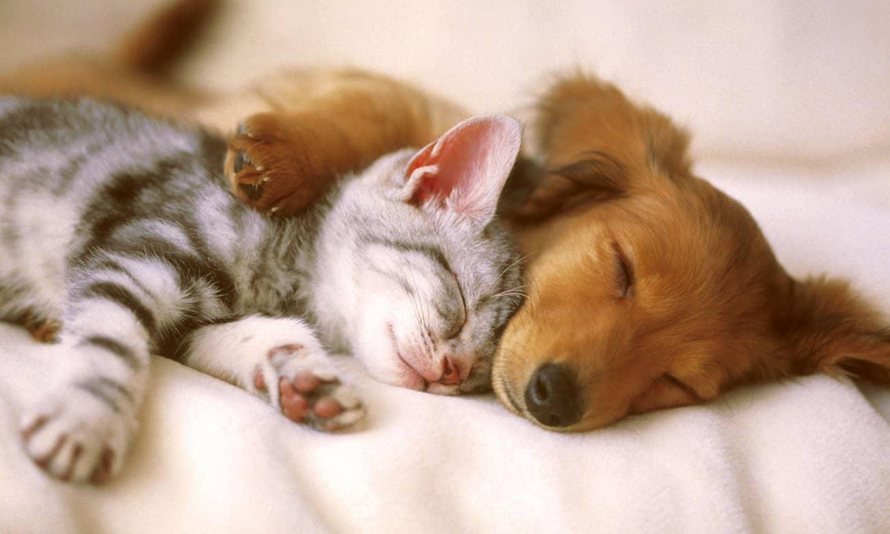 Animais domésticos podem contrair o coronavírus?