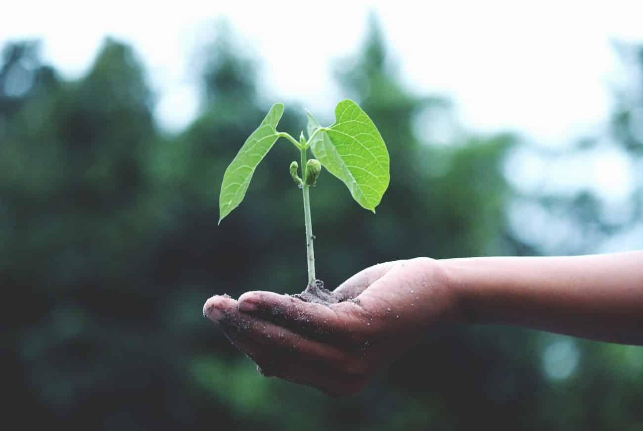 Qual é a importância das plantas?