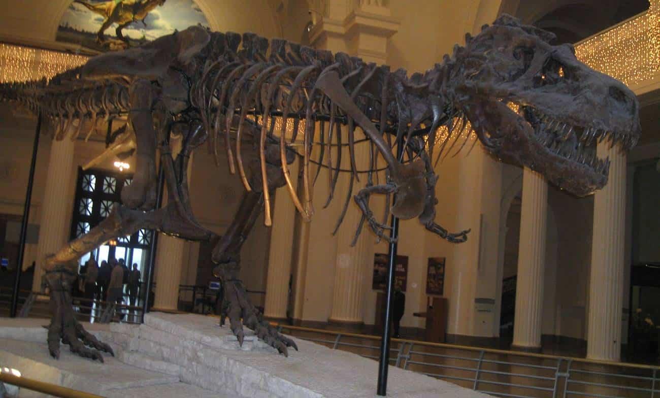 Esqueleto de dinossauro em museu