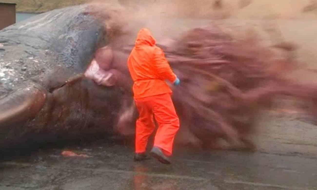 baleia explodindo